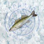 Судак свежемороженый (берш) 250-500гр
